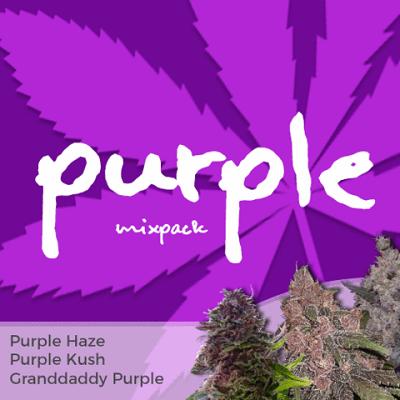Purple Mixpack Marijuana Seeds