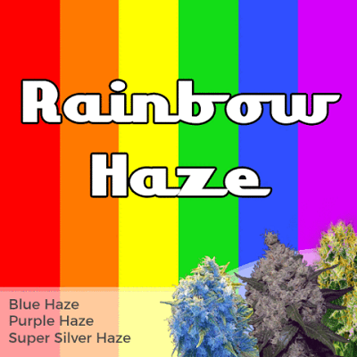 Rainbow Haze Mixpack Marijuana Seeds