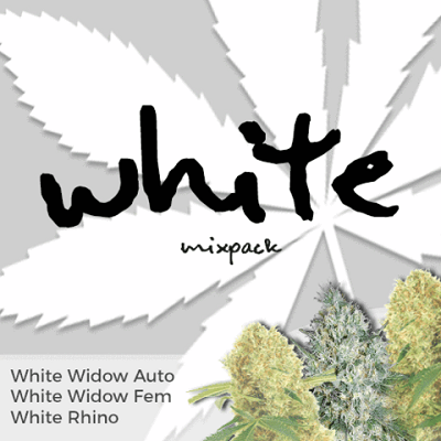 White Mixpack Marijuana Seeds