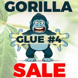 Marijuana Seeds - Gorilla Glue Sale