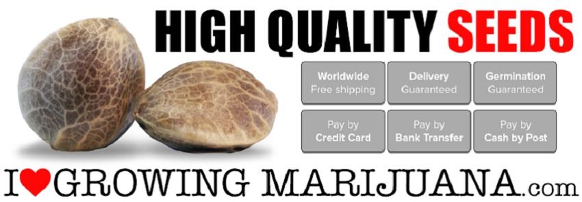 Buy Indoor Marijuana Seeds For Beginners Online