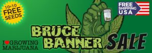 Bruce Banner Seeds Offer