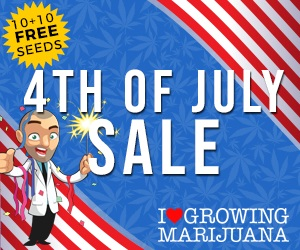 Marijuana Seeds 4th July Offers