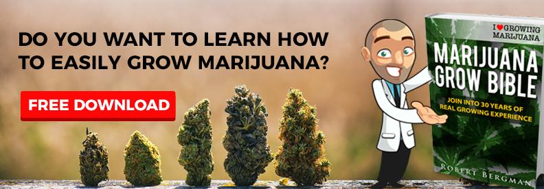 How To Grow Free Marijuana Seeds