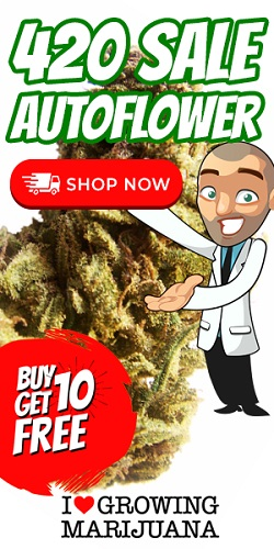 Free Cannabis Seeds In The 420 Sale