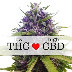 CBD Blueberry Medical Seeds
