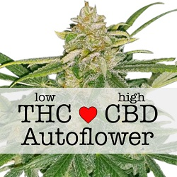 CBD Critical Mass Autoflower Medical Seeds