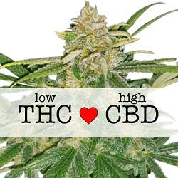 CBD Critical Mass Medical Seeds