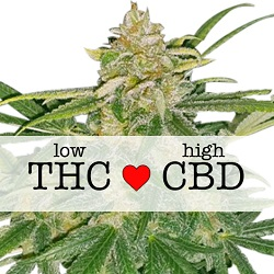 CBD Critical Mass Medical Seeds