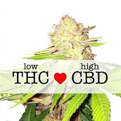 CBD Strawberry Kush Medical Seeds