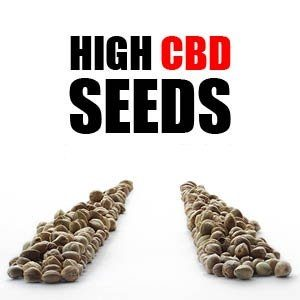 High CBD Feminized Seeds