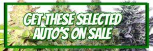 420 Autoflowering Seeds - Buy 10 Get 10 Free