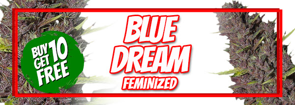 420 Sale Free Blue Dream Seeds