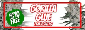 420 Sale Free Gorilla Glue Seeds