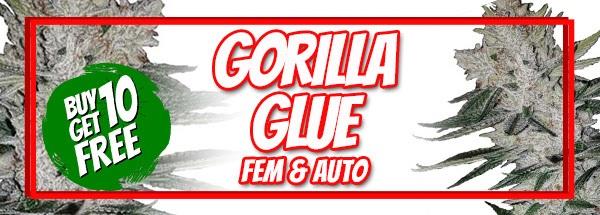 420 Sale Free Gorilla Glue Seeds