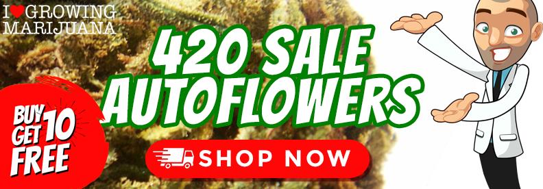 Celebrate 420 With Free Marijuana Seeds
