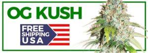 Buy OG Kush Seeds Online