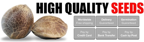 Buy Feminized Autoflowering Marijuana Seeds Online