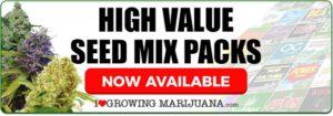 Mixed Marijuana Seeds For Sale Online