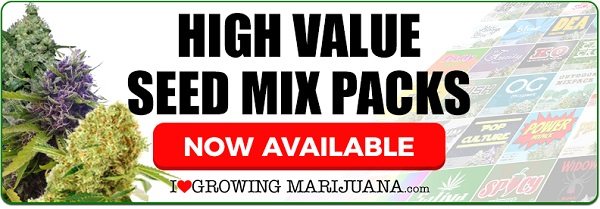 Mixed Marijuana Seeds For Sale Online