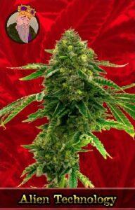 Alien Technology Feminized Cannabis Seeds