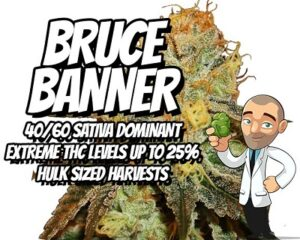 Bruce Banner Marijuana Seeds