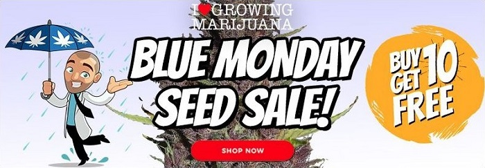 Buy Marijuana Seeds In The Blue Monday Sale