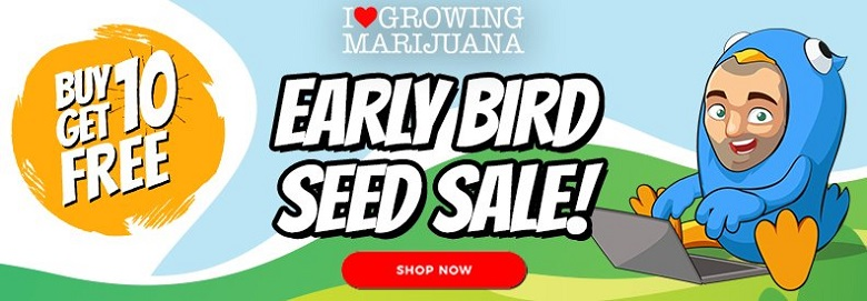 Buy Marijuana Seeds In The January Sale