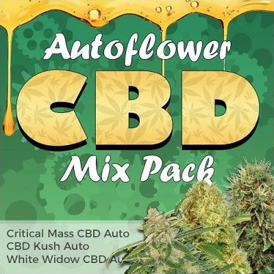 CBD Autoflower Seeds Mix