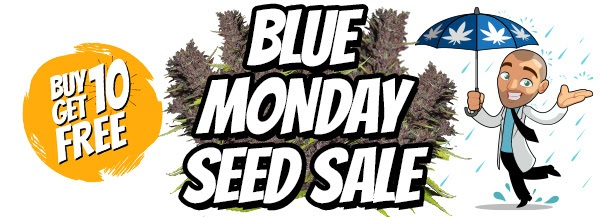 Free Blue Dream Marijuana Seeds In The Blue Monday Sale