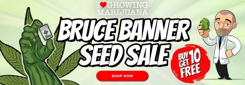 Free Bruce Banner Marijuana Seeds