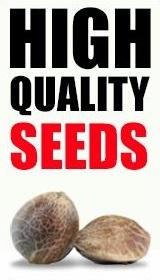 ILGM Seeds USA