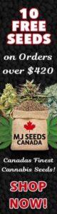 MJ Cannabis Seeds Canada