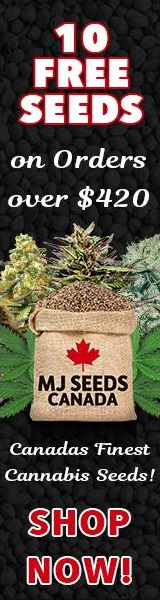 MJ Cannabis Seeds Canada