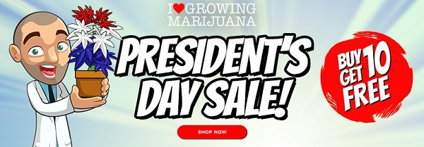 President's Day Sale - Cannabis Seed Deals