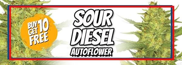 Sour Diesel Auto Flower