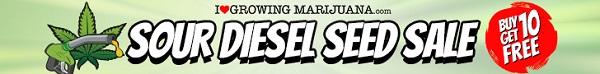 Sour Diesel Sale
