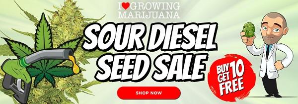 Sour Diesel Seeds - Buy 10 Get 10 Free Marijuana Seeds