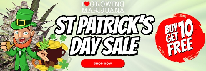 St Patricks Day Cannabis Seeds Offer
