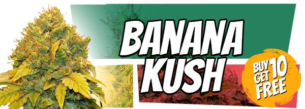 420 Free Banana Kush Marijuana Seeds