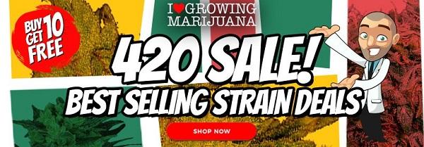 420 Marijuana Seeds