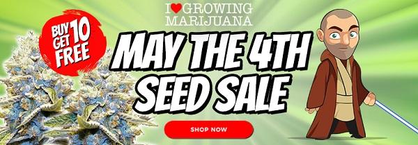 May 4th Free Marijuana Seeds Offer