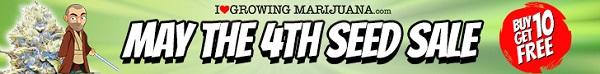 May 4th Sale Buy 10 Marijuana Seeds Get 10 Free