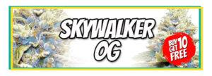 Skywalker OG Marijuana Seeds Sale