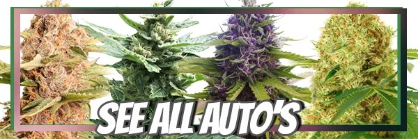 Get The Latest Deals On Autoflowering Seeds 2021